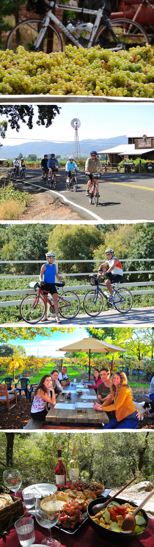 napa valley bike tours4